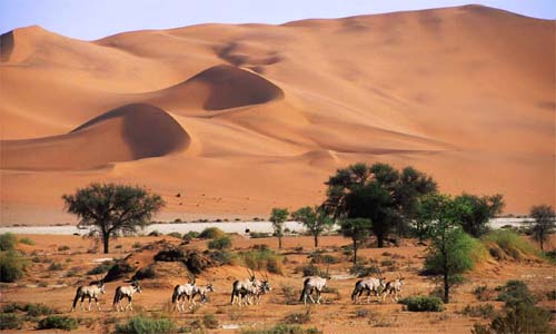 DESERT AND WILDERNESS1