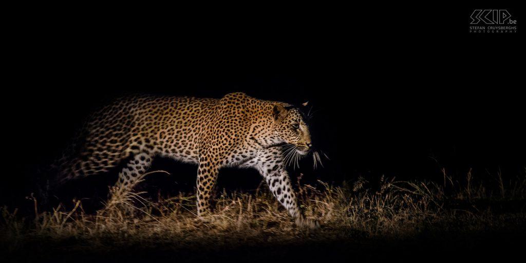 Zambia – South Luangwa – Luipaard